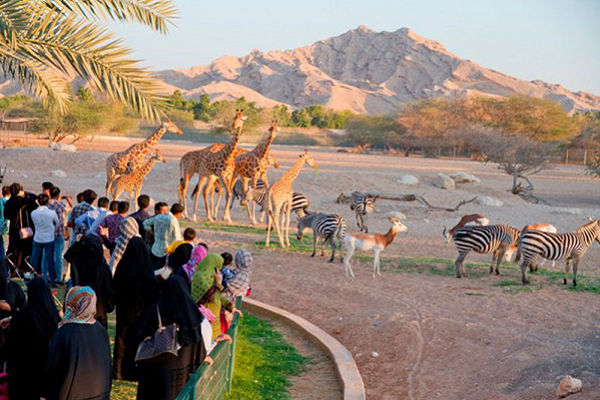 US$41 million expansion underway at UAE's Al Ain Zoo