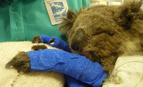 Healesville Sanctuary staff and volunteers mark the tenth anniversary of the Black Saturday bushfires