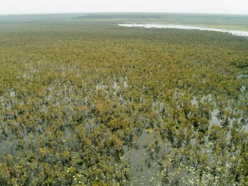 Northern Territory Rangers bringing Arafura swamp back from the brink
