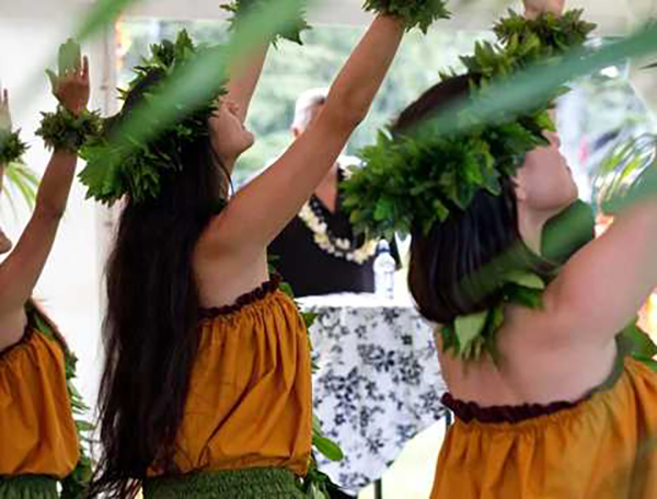 Pasifika Festival cancelled in Auckland
