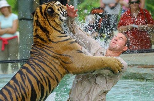 Worksafe Report Reveals Australia Zoo Handler Over