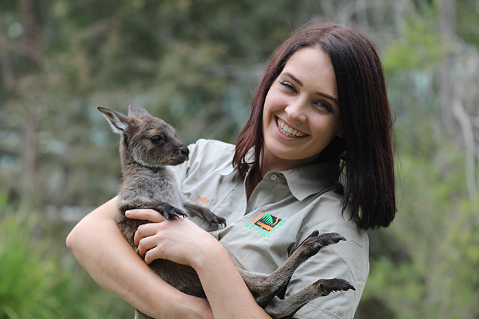 Kangaroo Island Joey takes centre stage at the Australian Reptile Park