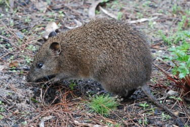 NSW Government funding to protect threatened native species