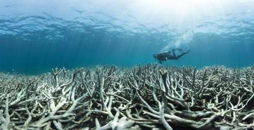 Reef tourism industry and conservationists demand climate action following release of new bleaching survey