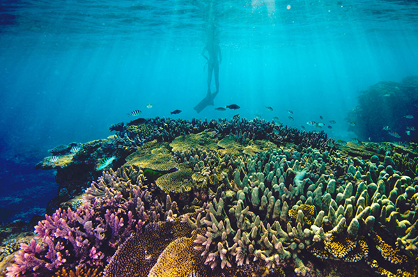 Research suggests coral reef protection could benefit all ecosystems