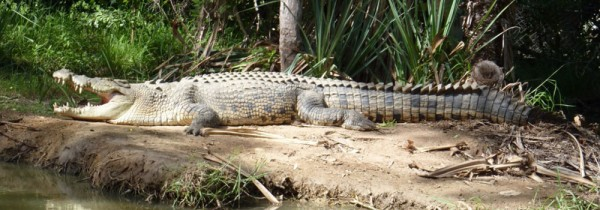 Handler injured in crocodile attack at Townsville wildlife sanctuary expected to make full recovery