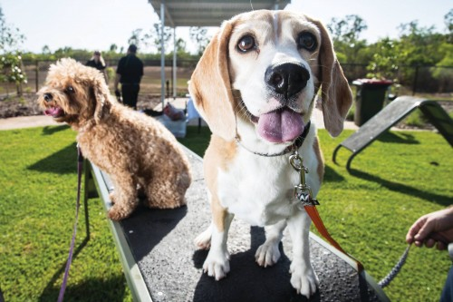 Dog lovers celebrate Darwin's first dedicated canine parks