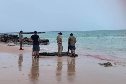 Saltwater crocodile killed at popular Broome beach