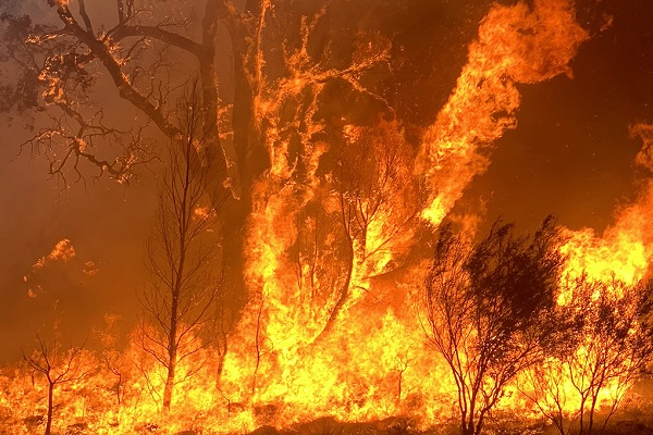 Victorian Government announces new dedicated agency to guide bushfire recovery