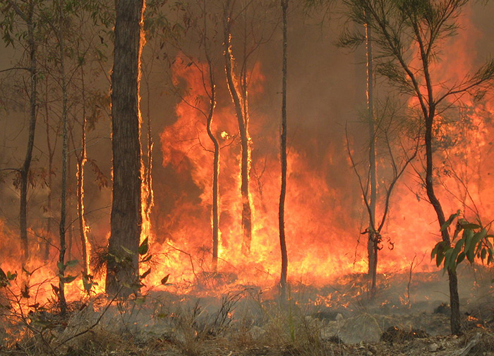 Blue Mountains Botanic Gardens threatened by bushfire
