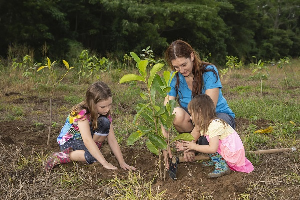 Cairns Regional Council initiative sees planting of 20,000 trees