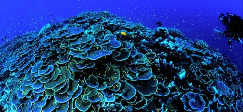 UNESCO report urges protection of oceans with World Heritage status