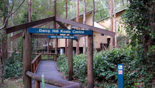 $3.3 million revamp for Brisbane's Daisy Hill Koala Centre