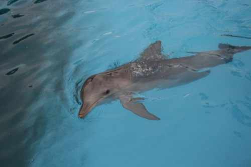 Campaign looks to new law to end dolphin captivity in NSW