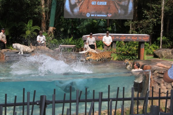 Dreamworld opens new look Tiger Island