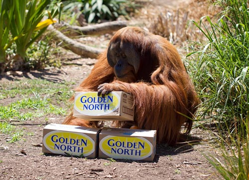 Zoos SA reverses decision to end selling palm oil free ice cream