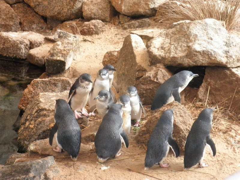 South Australian penguin conservation centre closes