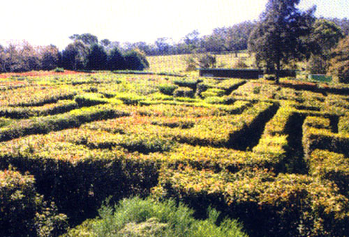 Granties Maze set for October opening?
