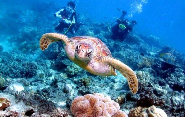 Proposed new dive and snorkel laws to ensure safety