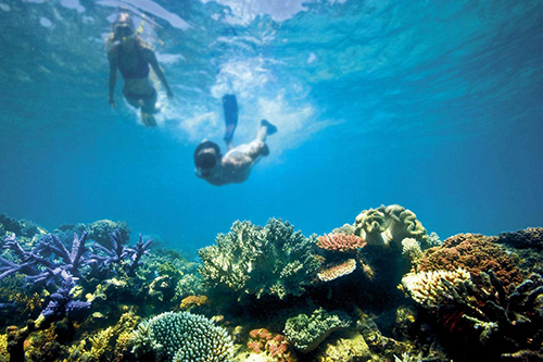 Australian Marine Conservation Society compares parties' election policies on reefs and oceans