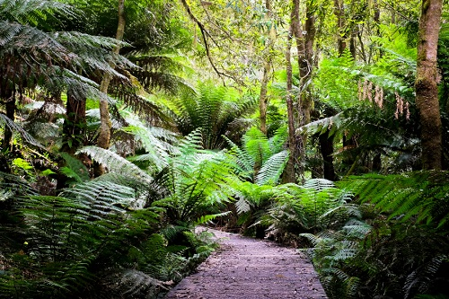 Victorian Government announces large investment in Great Otway National Park