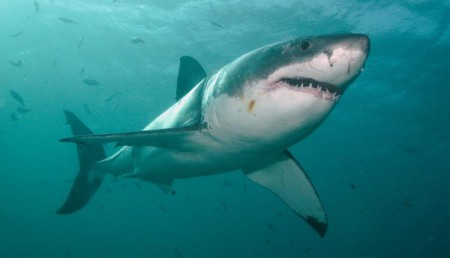 Western Australian Premier says shark attacks impacting tourism and way of life