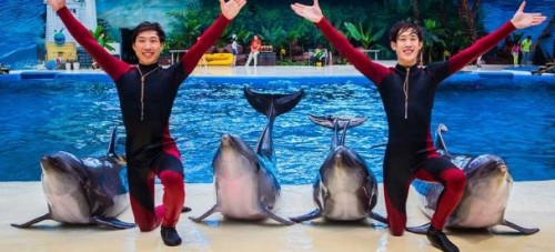 Haichang looks to develop ocean parks in Asia and Africa