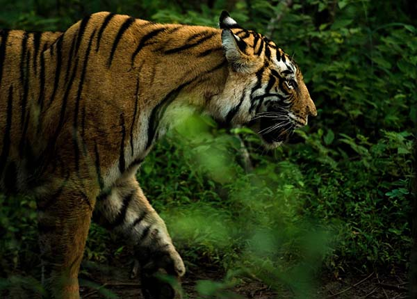 ALERT highlights that India's protected areas are rapidly disappearing