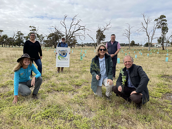 Sustainability grant helps fund new koala habitat in Greater Geelong