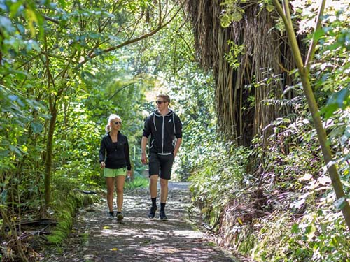 Wild for Taranaki receives funding for its planned Rawhitiroa Wetland Walk