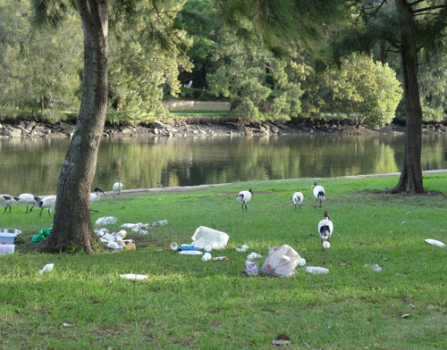 Report shows littering increase at parks and beaches