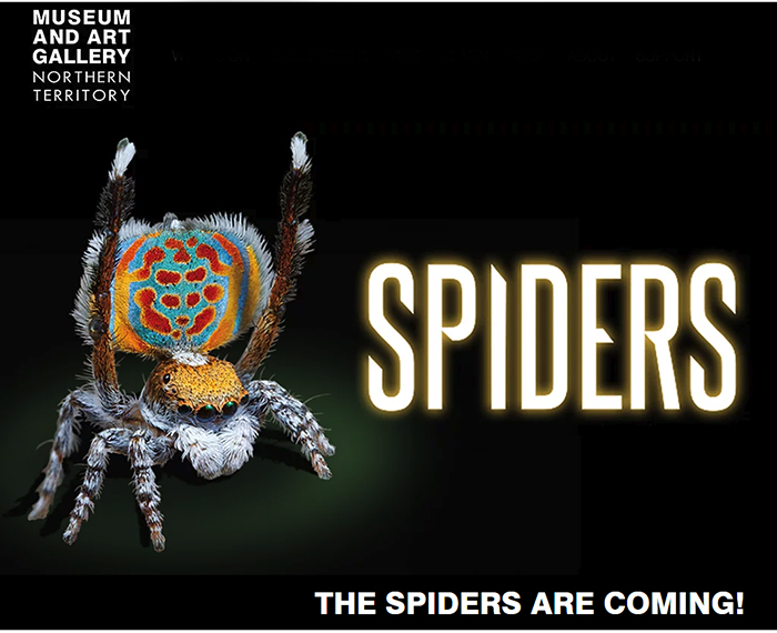 Interactive exhibition offers immersive encounters with spiders at MAGNT