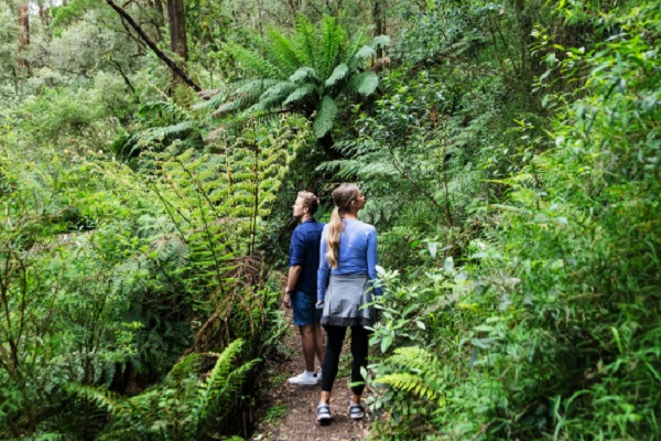 Great Otways National Park benefits from facility upgrades