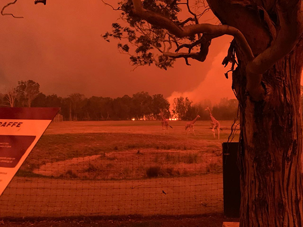 Heroic effort by zookeepers saves Mogo Wildlife Park from devastating bushfires