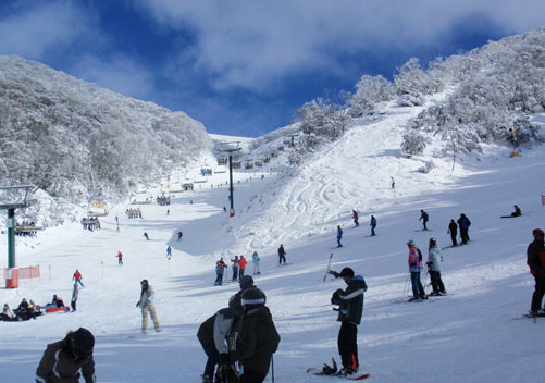 Research shows increased visitor numbers across Victoria's alpine resorts
