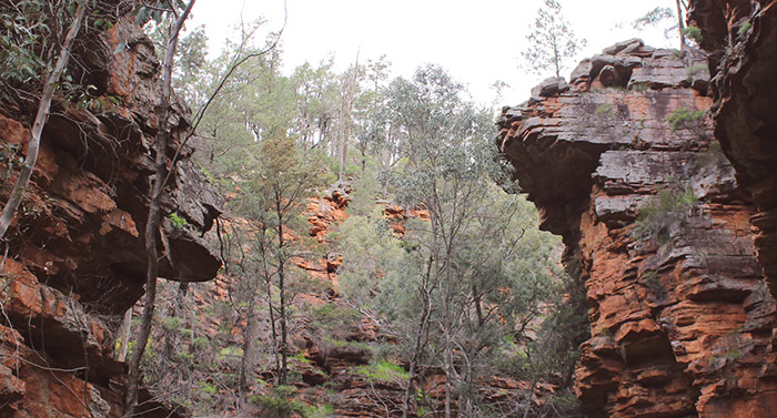 More than 2,000 hectares added to South Australia's parks