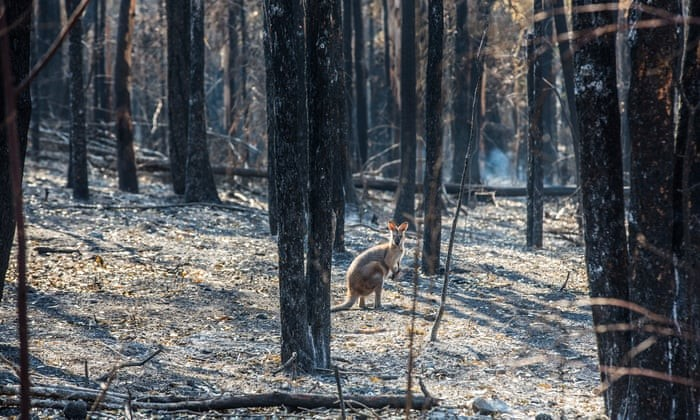 Aussie Ark declares NSW State of Emergency for wildlife