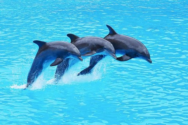 New Dolphin attraction opens in Thailand
