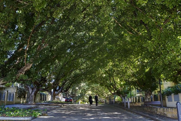 City of Perth Urban Forest program acknowledged for role in improving public health