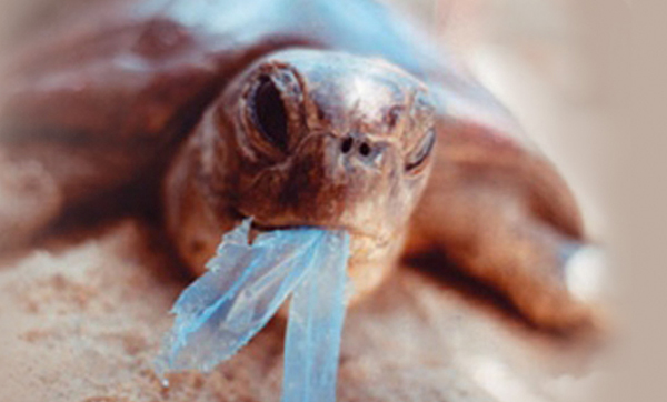 Australian Marine Conservation Society welcomes Queensland government proposal to ban single-use plastics
