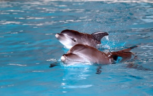 Breeding success at Resorts World Sentosa's Dolphin Island