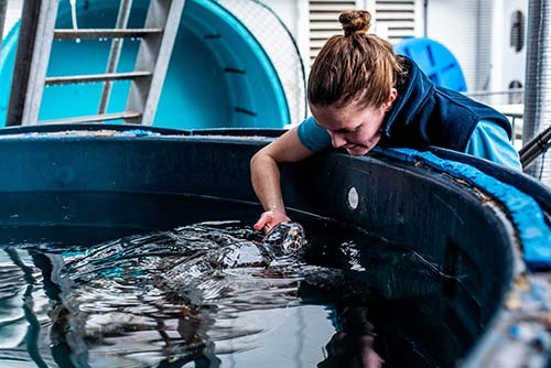 SEA LIFE Sydney Aquarium officially opens its Animal Rescue Centre