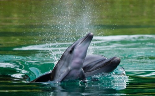 Sea World welcomes Baby Dolphin