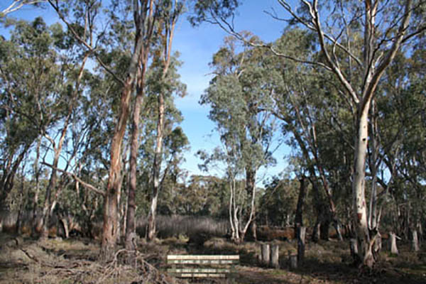 Man convicted for habitat destruction in Victorian conservation reserve
