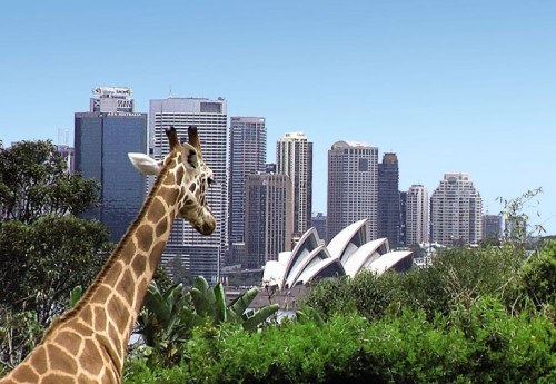 Legal battle begins over Sydney Zoo trademark