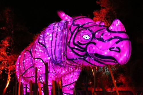 Taronga Zoo shines a light on threatened species during Vivid Sydney
