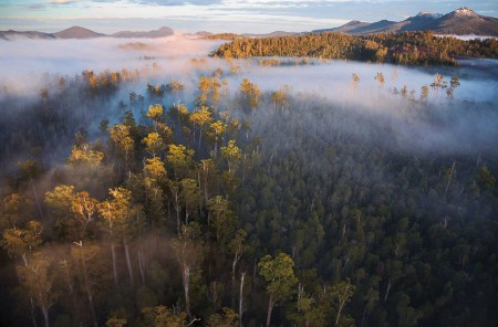 UNESCO agrees World Heritage Area status for Tasmanian forests