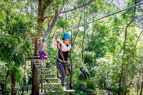 Young adventurers enjoy TreeTop Challenge attraction at Mt Tamborine