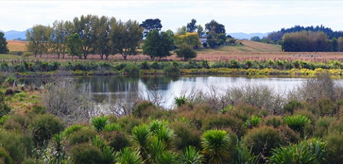 Hamilton City Council retains Waiwhakareke Natural Heritage Park as part of ecological project