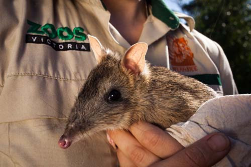 Federal Government appoints commissioner for threatened species